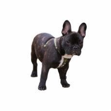 French Bulldog sculpture, gift idea Cutout