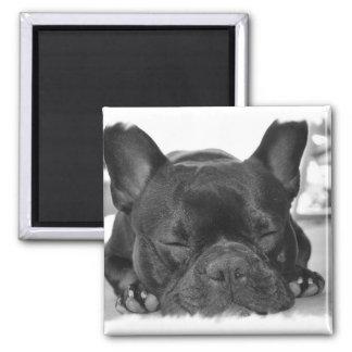 French Bulldog Square Magnet
