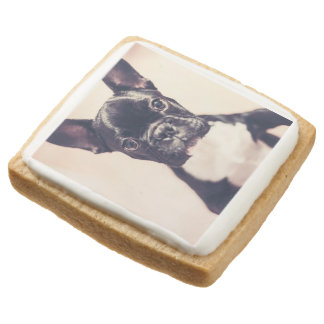 French bulldog square shortbread cookie