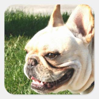 French Bulldog Square Sticker