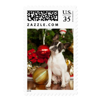 French bulldog tilting head postage