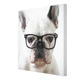 French Bulldog Wearing Black Eye Glasses Canvas Print