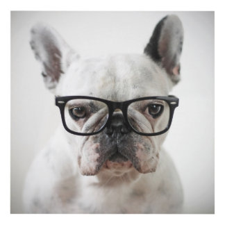 French Bulldog Wearing Black Eye Glasses Panel Wall Art