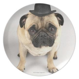 French bulldog wearing bowler, studio shot melamine plate