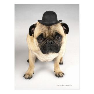 French bulldog wearing bowler, studio shot postcard