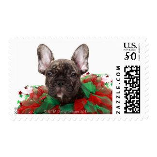French bulldog wearing Christmas collar Postage