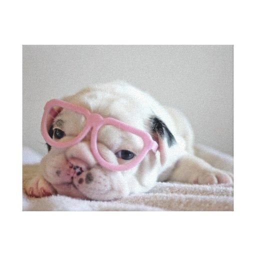 French bulldog white cub Glasses, lying on white Canvas Print