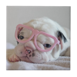 French bulldog white cub Glasses, lying on white Ceramic Tile