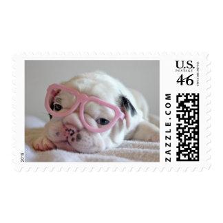 French bulldog white cub Glasses, lying on white Postage