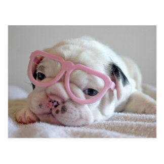 French bulldog white cub Glasses, lying on white Postcard
