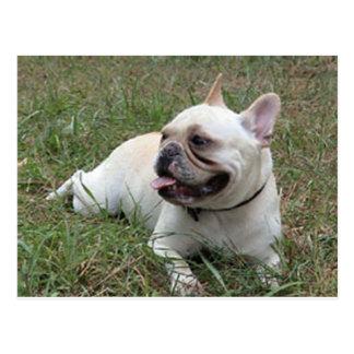 French Bulldog white full.png Postcard