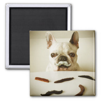 French Bulldog With A Mustache Magnet