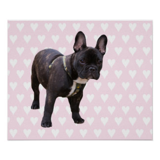 French Bulldog with pink white hearts poster