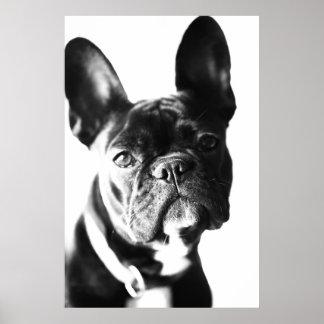 French Bulldogg Poster