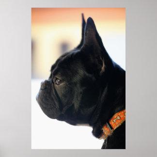 French Bulldogge Poster