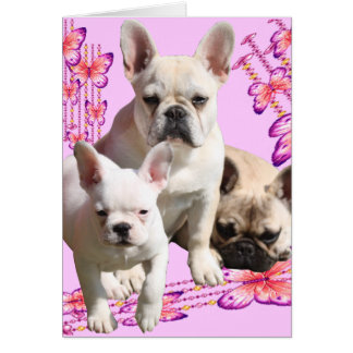 French Bulldogge trio greeting maps Card