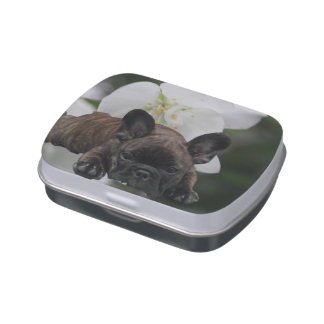 French Bulldoggen Jelly Belly box Candy Tins