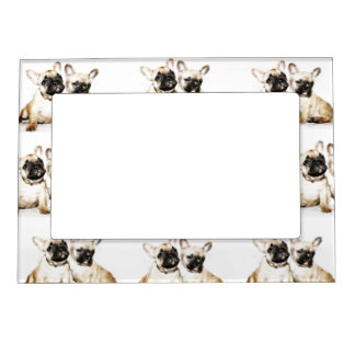French Bulldogs Magnetic Photo Frame