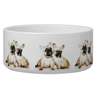 French Bulldogs Pet Water Bowl