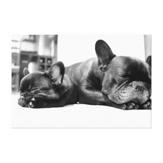 French bulldogs puppies sleeping side by side canvas print