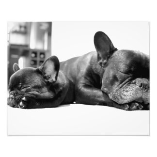French bulldogs puppies sleeping side by side photo print