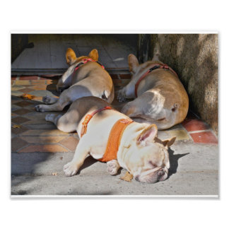 French Bulldogs Sleeping Photo Print