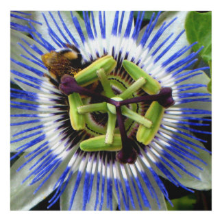 French Bumble Bee and the Passion Flower Panel Wall Art