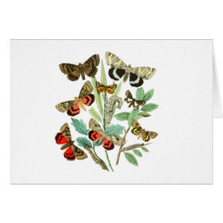 French Butterflies Card
