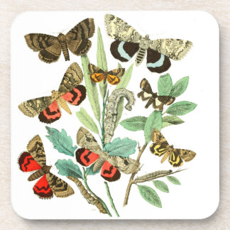 French Butterflies Coaster
