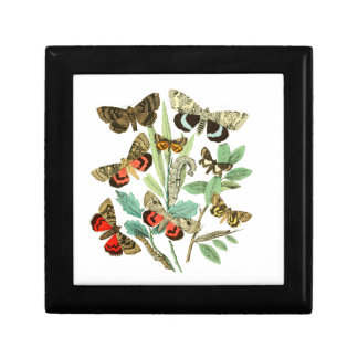 French Butterflies Gift Box