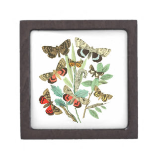 French Butterflies Jewelry Box