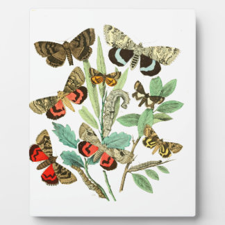 French Butterflies Plaque