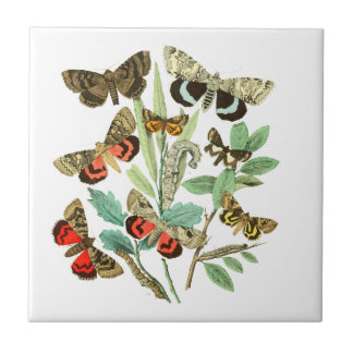 French Butterflies Tile