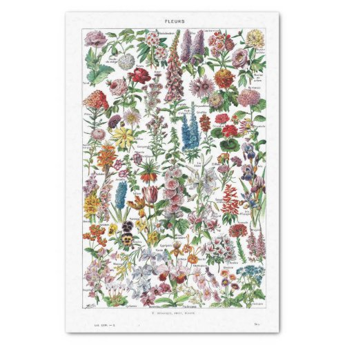 French Dictionary Plate Print_No22137_FlowersFle Tissue Paper