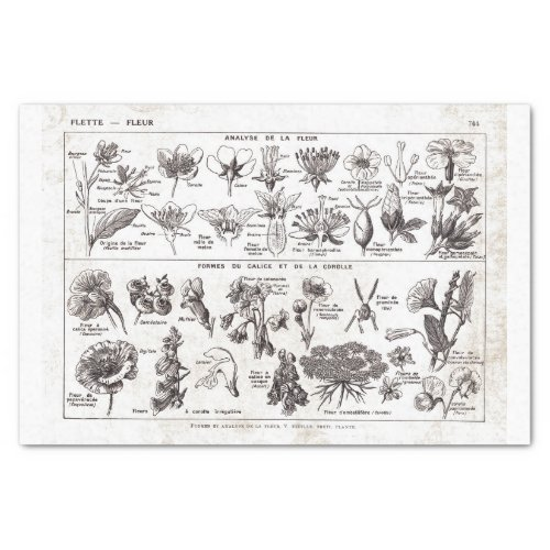 French Dictionary Plate Print_No22138_FlowersFle Tissue Paper
