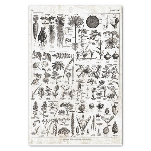 French Dictionary Plate Print_No22139_PlantsPlan Tissue Paper