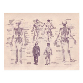 French Encyclopedia 1920, Human Anatomy Postcard