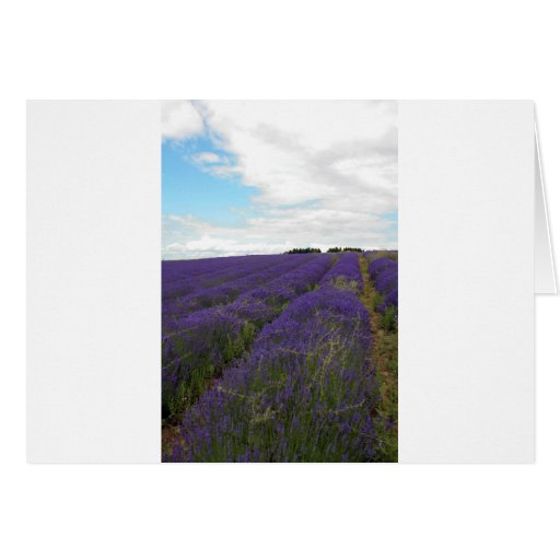 french lavender fields card