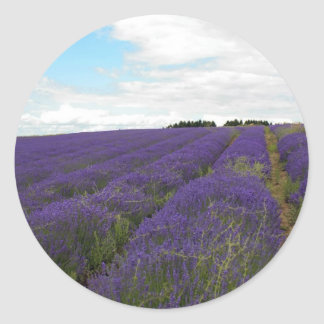 french lavender fields classic round sticker
