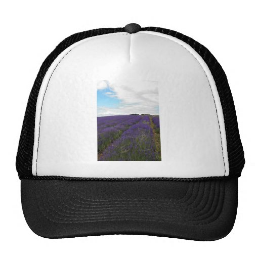 french lavender fields hat