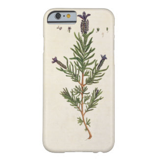 French Lavender, plate 241 from 'A Curious Herbal' Barely There iPhone 6 Case