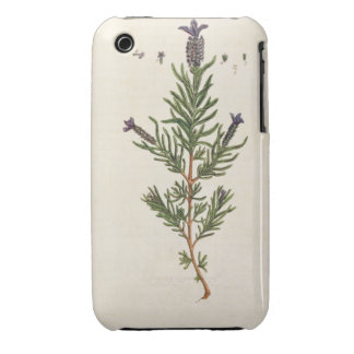 French Lavender, plate 241 from 'A Curious Herbal' iPhone 3 Covers