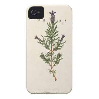 French Lavender, plate 241 from 'A Curious Herbal' iPhone 4 Case