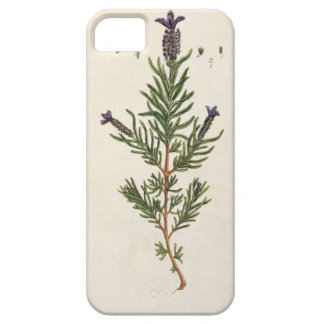 French Lavender, plate 241 from 'A Curious Herbal' iPhone SE/5/5s Case