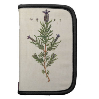 French Lavender, plate 241 from 'A Curious Herbal' Folio Planner