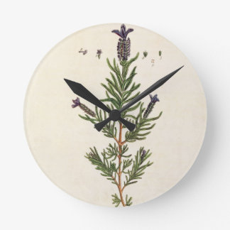 French Lavender, plate 241 from 'A Curious Herbal' Round Clock