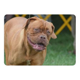 French Mastiff Dog 5x7 Paper Invitation Card