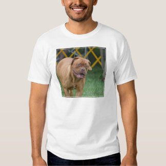 French Mastiff Dog Tshirts