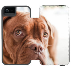 French Mastiff iPhone SE/5/5s Wallet Case
