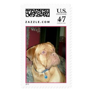 French Mastiff Postage